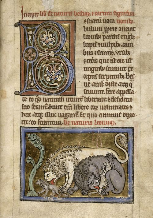 A page from a medieval bestiary, showing an illustration of a lion breathing life into one of its cubs.