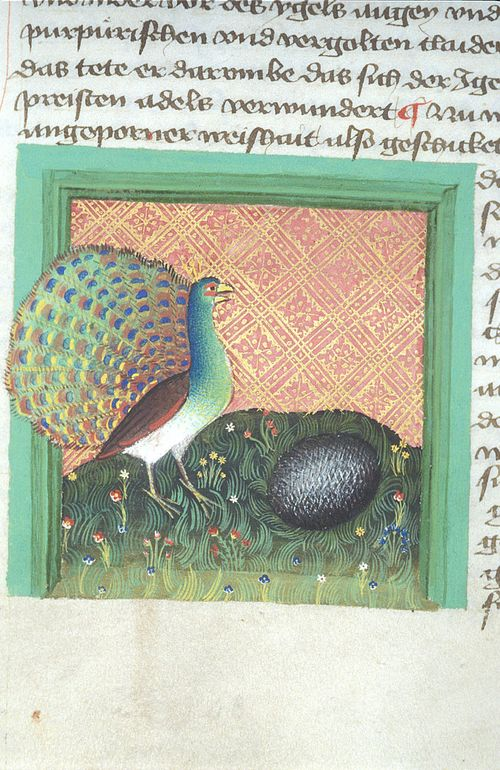 A page from a medieval manuscript, showing an illustration of a peacock being reproached by a hedgehog for its vanity.