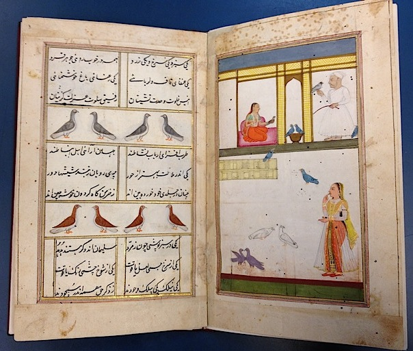 The Kabūtarnāmah, an illustrated pigeon manual copied in 1788, here showing a training session and some different types of pigeon (IO Islamic 4811, ff. 2v-3)