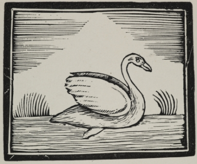 Woodcut of swan