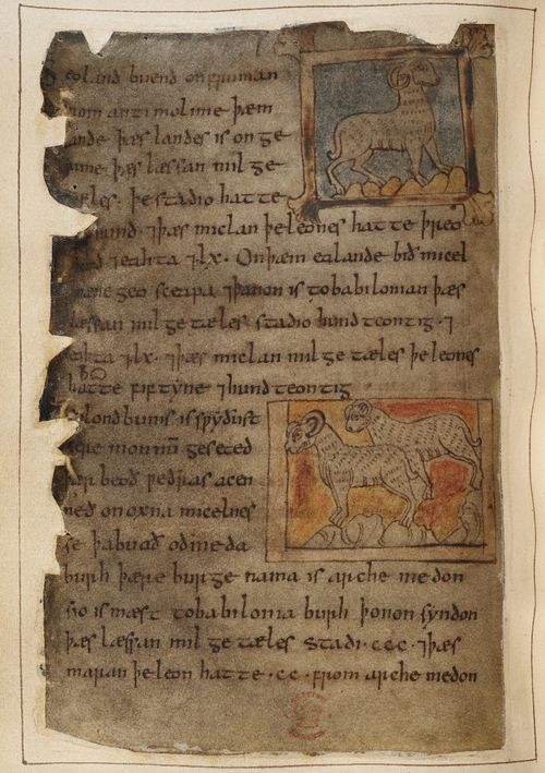 A detail from the Beowulf Manuscript, showing an illustration of sheep and rams, accompanying the Marvels of the East.