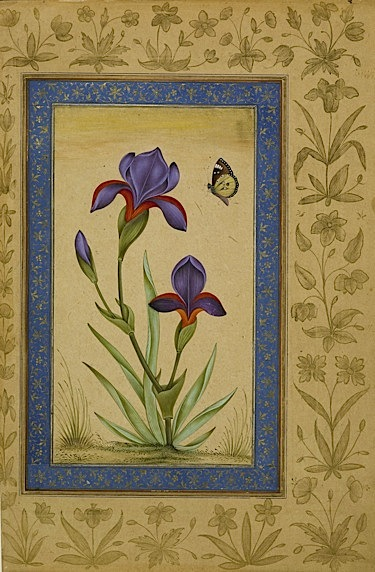 A blue iris and a butterfly (Add.Or.3129, f 41v).