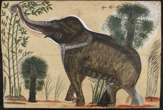 Or.14793. Folio 2 of an Elephant Treatise, Central Thailand, second half of 19th century. Click here for link to zoomable image to BL Digitised Manuscripts