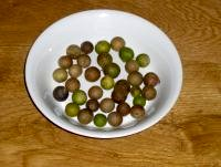Oak marble galls sitting in a white china bowl on a timber table. The balls are a mxture of dark brown, light brown, and green.