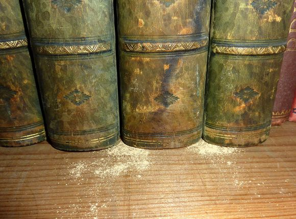A close-up image of four book spines, green in colour, with the focus on their ends and the wooden bookshelf they are resting on. On the wooden shelf and around the spines can be seen the light-coloured frass which looks a little similar to sawdust in this image.