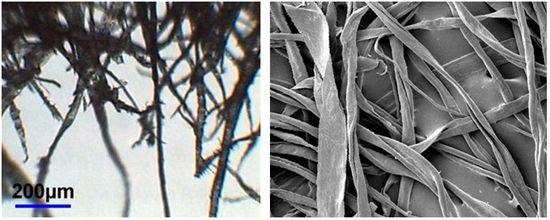 Magnified images showing wood pulp on the left and rag paper on the right. The magnified wood pulp fibres are short and thin, and don't overlap much. They almost look like a bunch of insects' legs in this image. This is contrasted with the rag fibres on the right, which are thicker and more intertwined. These almost resemble a variety of seawood wrapped around each other.