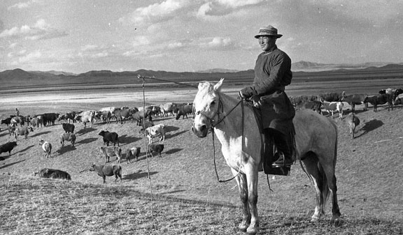 A Mongolian on horseback with his cattle and the vast sweeping steppe  in the distance.