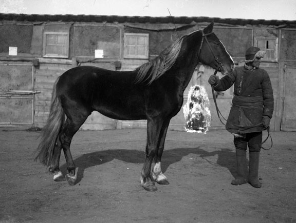 Mongolian holds the reins of a horse that is in profile. The horses coat looks like velvet.