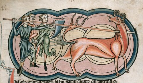 A detail from a 13th-century bestiary, showing an illustration of hunters pursuing a bonnacon.