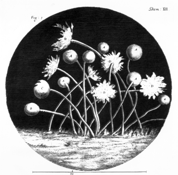 In this illustration, blue mould looks flower like, with stems coming from the surface, some of which end in circular balls and others which end in petal-like shapes.