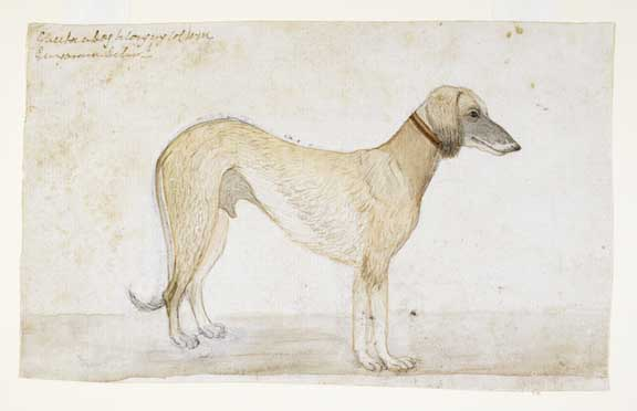 A light brown saluki.  By Gangaram, 1790.  Inscribed above: Chuba a Dog belonging to CWM.  Gangaram delint.  Water-colour on paper; 126 by 206 mm.  Add.Or.4146
