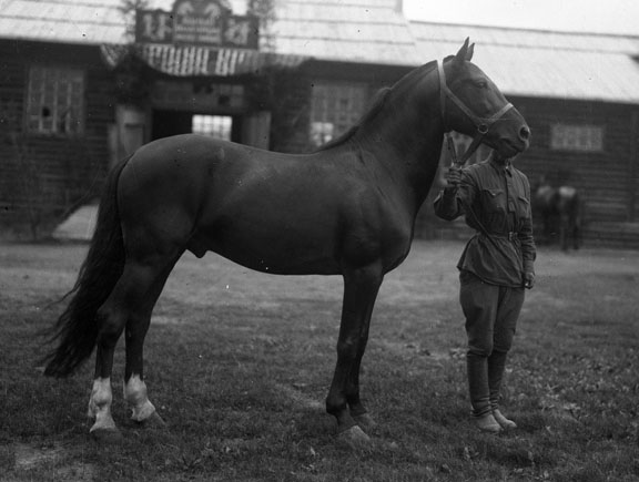 A man holds the reins of a much taller horse.