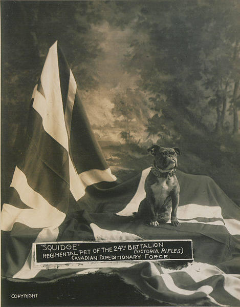 469px-Squidge_Regimental_pet_of_the_24th_Battalion_(HS85-10-29943)