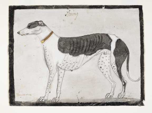 A black and white hound.  By Gangaram, 1790.  Inscribed above: Spring, and below: Gungaram.  Water-colour on paper; 134 by 182 mm.  Add.Or.4147