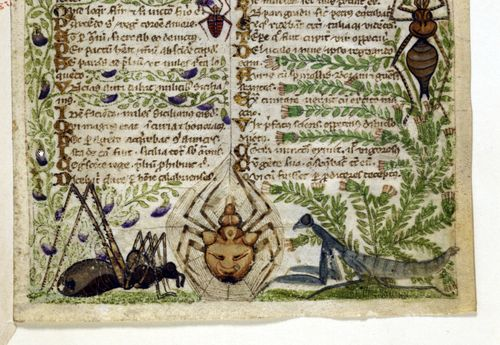 A detail from the Cocharelli Codex, showing marginal illustrations of spiders and a praying mantis.