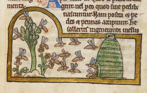 A detail from a 13th-century bestiary, showing an illustration of bees returning to their hives.