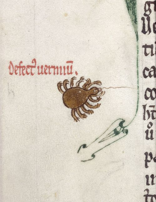 A detail from a medieval manuscript, showing an illustration of a ten-legged spider.