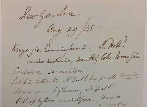 albot's note, dated 29 August, 1845, made of plants at 'Kew Gardens'