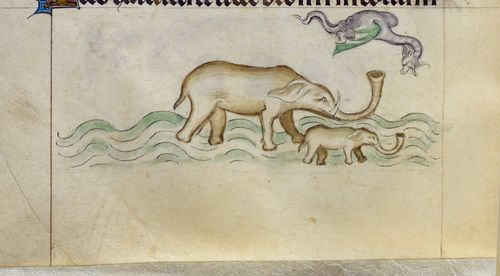 A detail from the Queen Mary Psalter, showing an illustration of an elephant giving birth in water, with a dragon overhead.