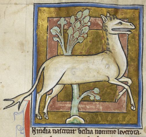A detail from a bestiary, showing an illustration of a leucrota.