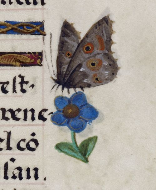 A detail from the Breviary of Isabella of Castile, showing an illustration of a butterfly.