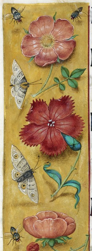 A detail from the Hours of Joanna I of Castile, showing a decorated border, with plants, moths, and flies.