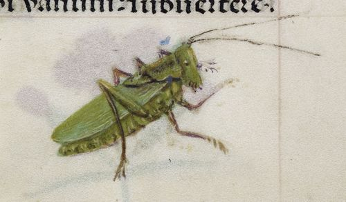 A detail from the Breviary of Isabella of Castile, showing an illustration of a grasshopper.