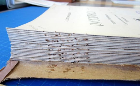 A close-up of the spine, which has had the staples and cloth removed. Holes and rust stains are still visible where the staples were originally used.
