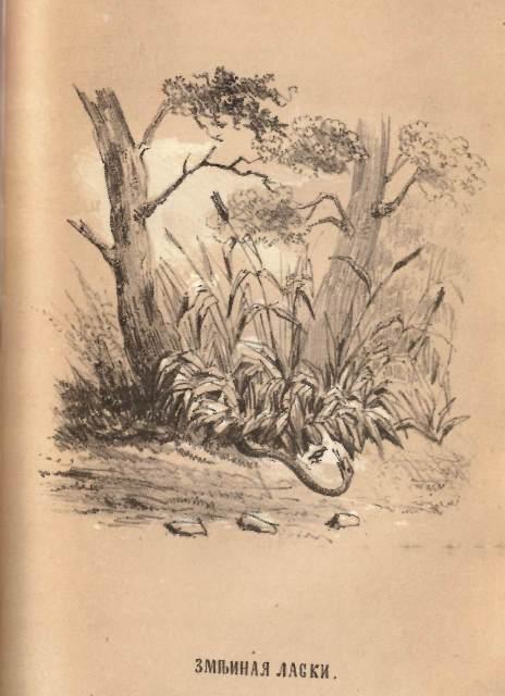 A snake and a skylark under a tree
