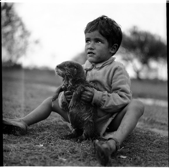 A young boy holds an otter.