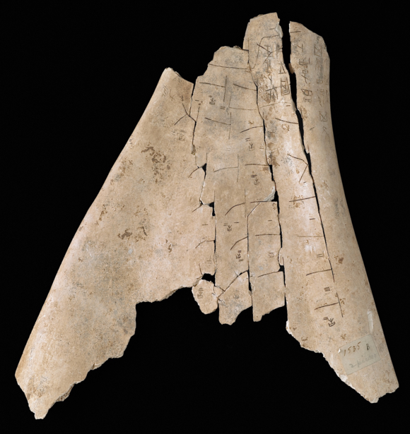 Another bone against a black background, showing four vertical lines going up the length of the bone, each with a series of shorter horizontal lines.