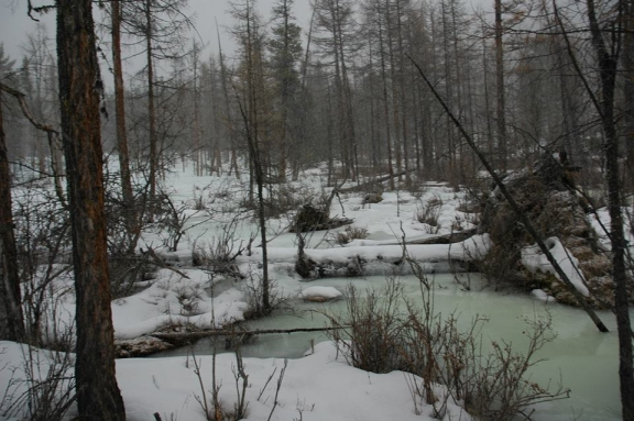 A frozen stream in a wooded area.