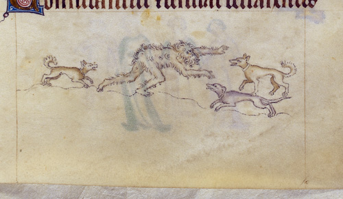 A detail from the Queen Mary Psalter, showing a marginal illustration of a wodewose surrounded by dogs.