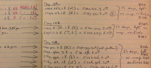McLaren 1Detail from McLaren's laboratory notebook dated 1955-1959 recording her experiments concerning embryo transplants in mice