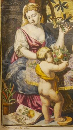 Maria Sibylla frontis detail