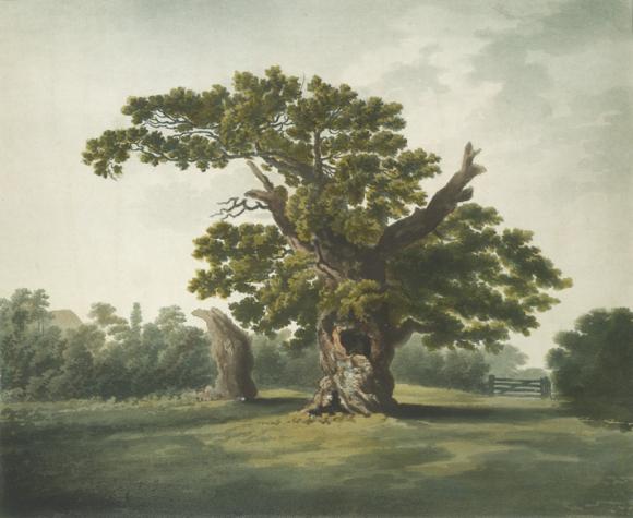 Yardley Oak