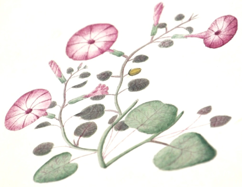 Drawing of pink flowers