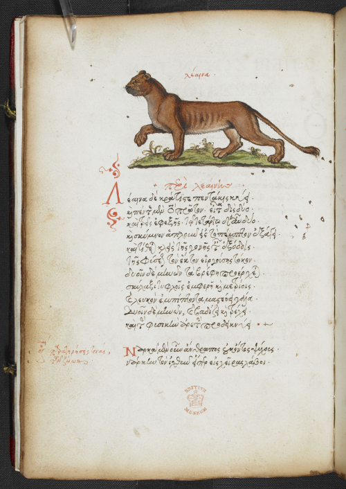 A page from a 16th-century Greek manuscript, showing an illustration of a lioness.