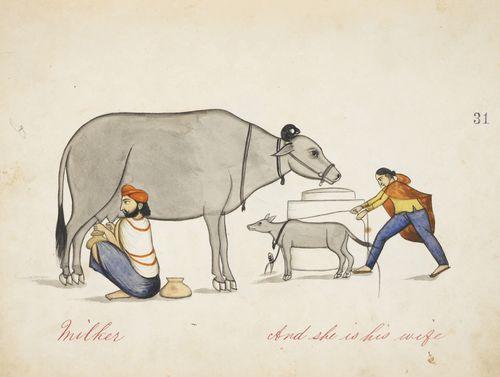 Man in turban milking a cow