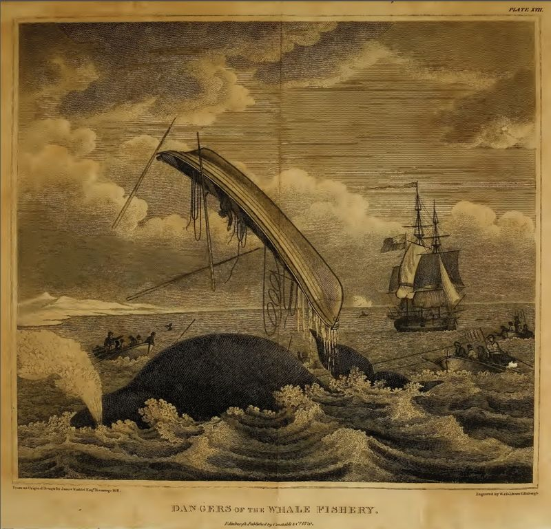 Scoresby frontispiece 2