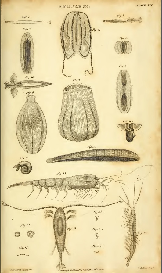 Scoresby sea fauna