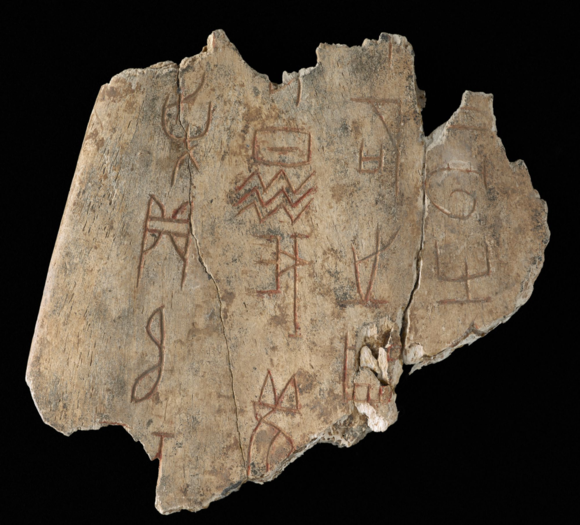 A close-up image of one of the oracle bones against a black background showing the script carved into bone alongside cracks in the bone.