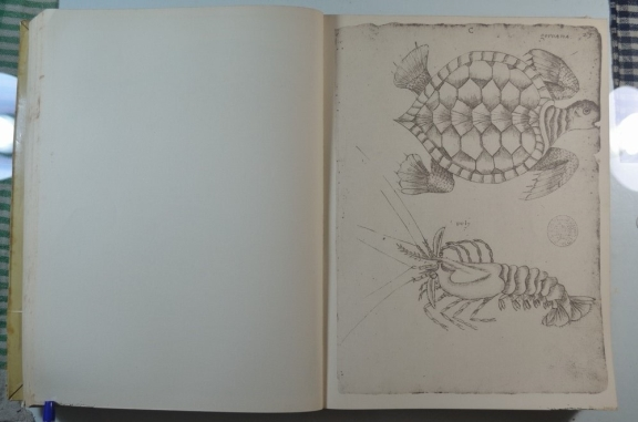 Illustration of a turtle and lobster.