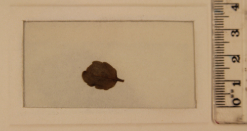 British Library Egerton-MS-3097-B-leaf-from-Mozart's-grave
