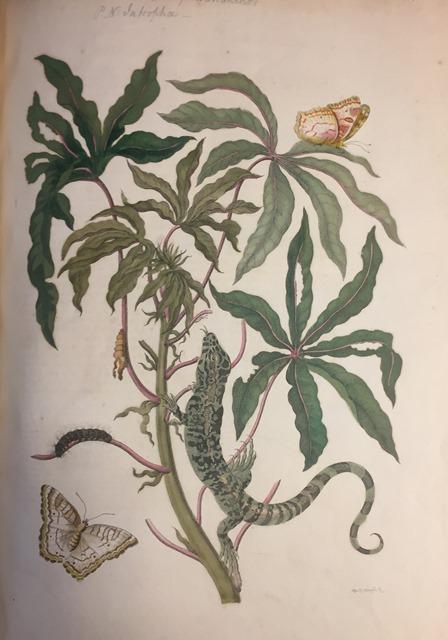 A green lizard and two butterflies