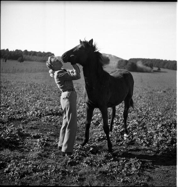 16. EAP755_1_1_29-Horses_807_L