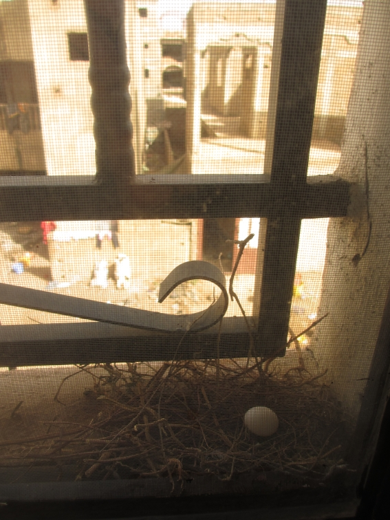 Bird's nest on window sill, with unguarded egg.