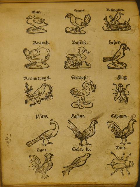 Birds page 3