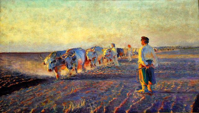 Kostomarov Oxen