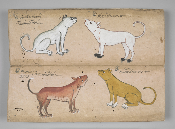 Year of Dog Thai or_16799_f025r